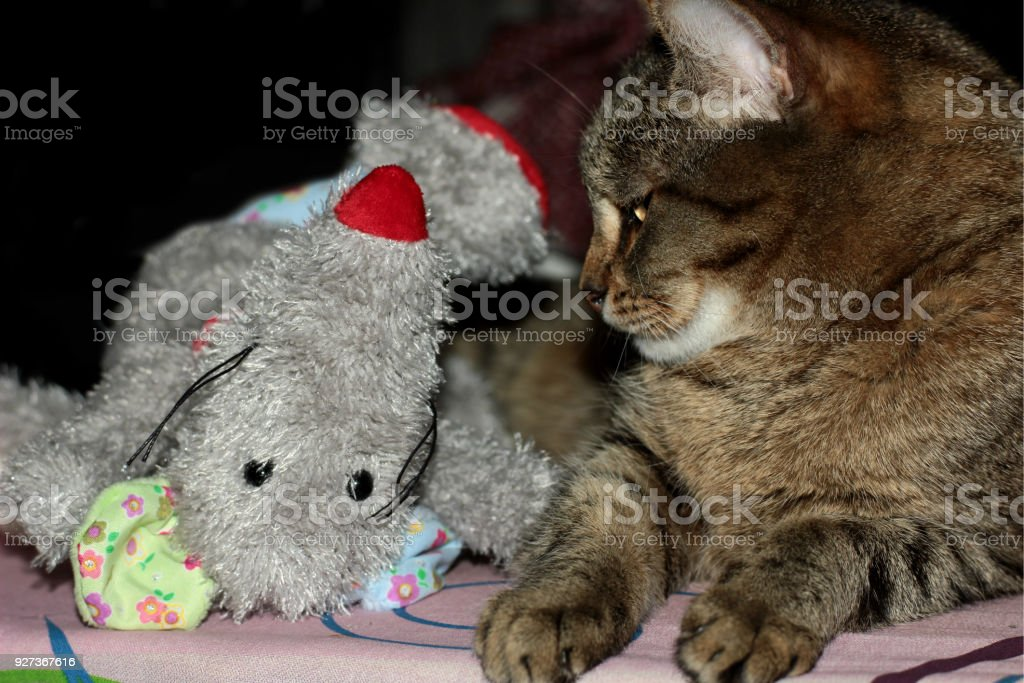 cat with his toy - Royalty-free Animal Stock Photo