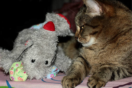 Cat With His Toy Stock Photo - Download Image Now