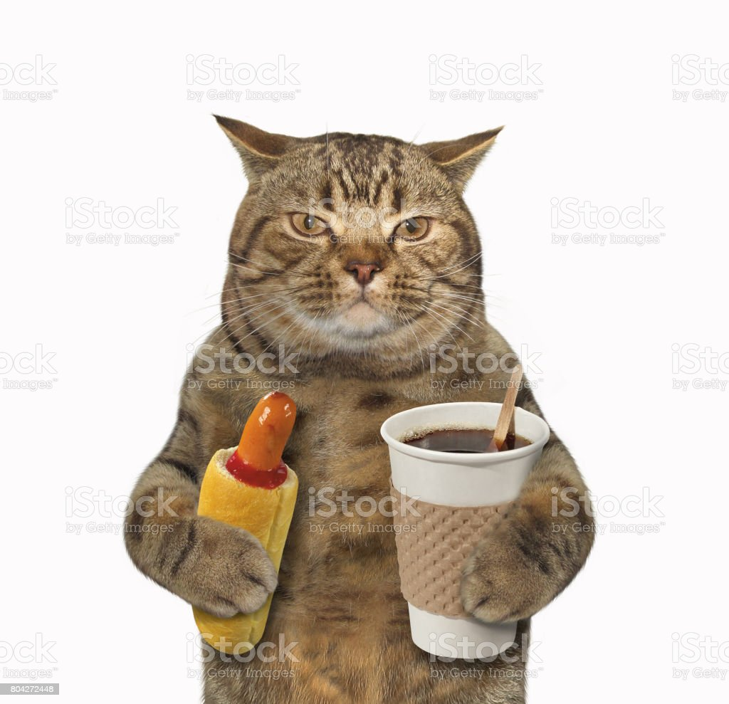 Cat with hotdog and coffee stock photo
