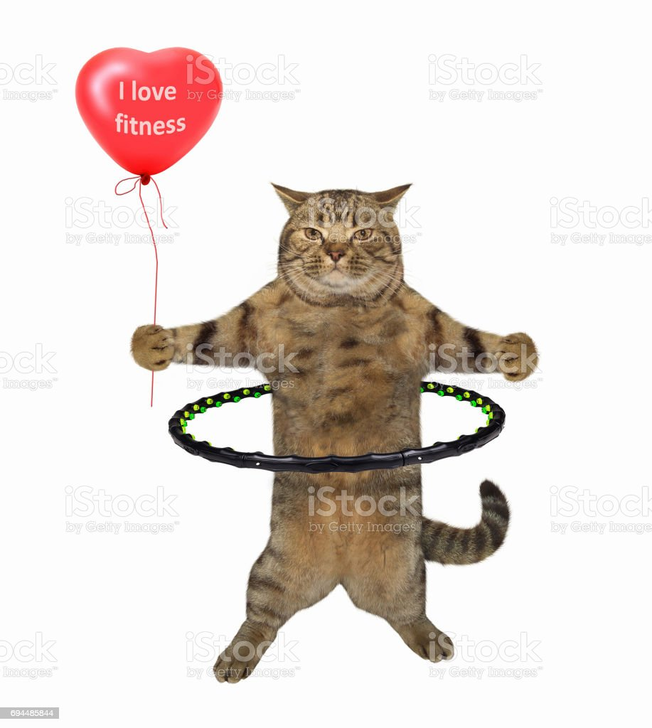 Cat with hula hoop stock photo