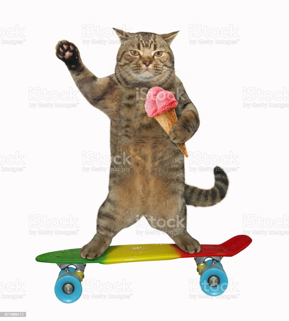 Cat with ice cream rides a skateboard stock photo