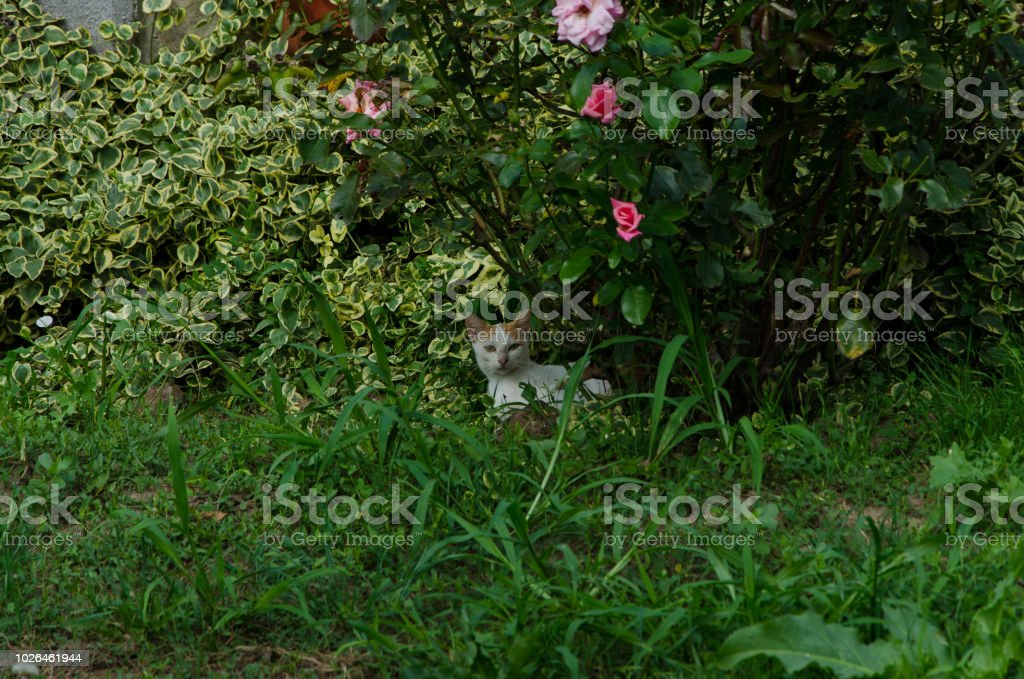 A Cat With Its Curious Kittens Amidst Garden Grass Bushes And