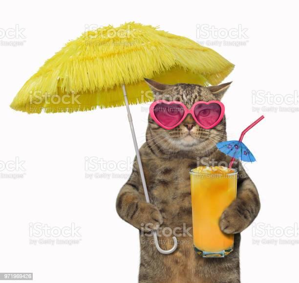 Cat with juice under the yellow umbrella picture id971969426?b=1&k=6&m=971969426&s=612x612&h=4gchjhvjp i5zhjuboi ap7zdxxqzksrywaoqf52idu=
