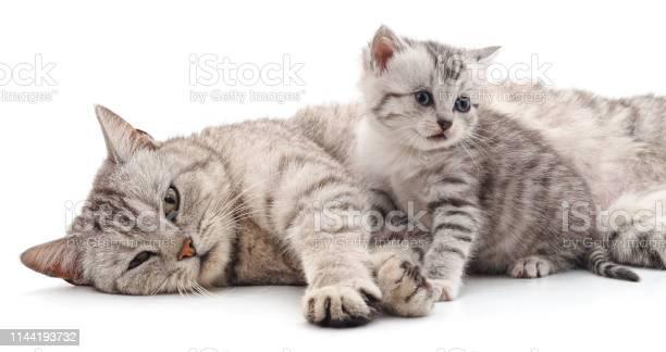 Cat with kitten picture id1144193732?b=1&k=6&m=1144193732&s=612x612&h=2ld7py b7ps3nitjn5gwbuhj8csyzun p53gs0pxiym=