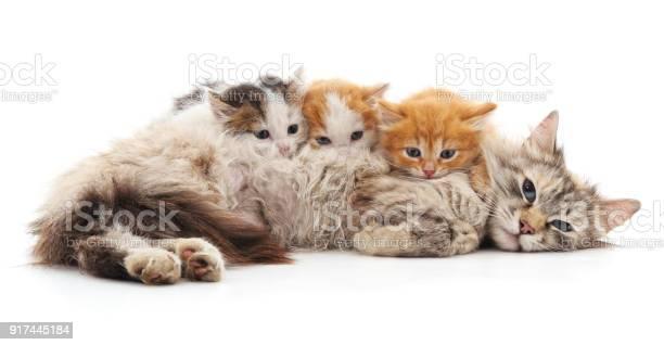 Cat with kittens picture id917445184?b=1&k=6&m=917445184&s=612x612&h=drfqomb63k20n0fcqtb6ly51vjyu5ixzqaunr1cy8ri=