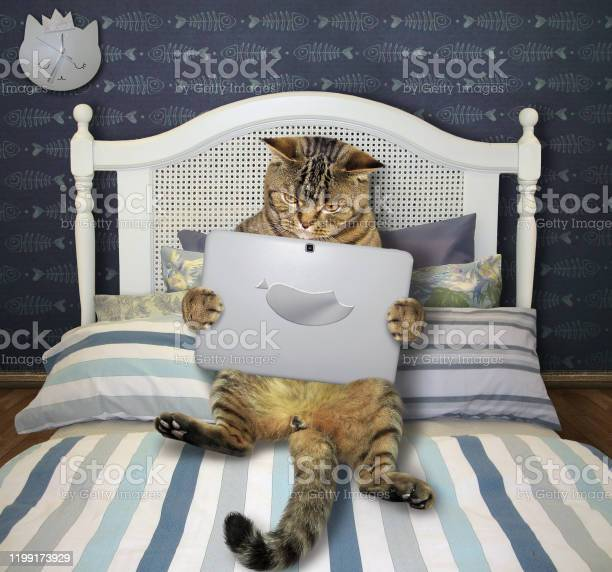 Cat with laptop lies on bed picture id1199173929?b=1&k=6&m=1199173929&s=612x612&h=4mdm4ujrquqftrki7nx60t8brqaebjnzscmjr  bw18=