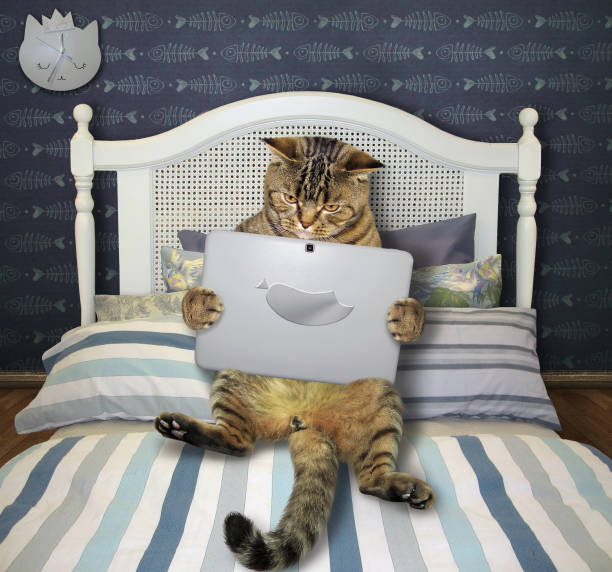 Cat with laptop lies on bed picture id1199173929?b=1&k=6&m=1199173929&s=612x612&w=0&h=l09bhzkz2u1vtrvpukeev5lgzxbnsafsxvweblpq9q8=