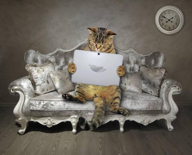 Cat with laptop on stylish sofa picture id1193047775?b=1&k=6&m=1193047775&s=612x612&w=0&h=etji3kjpnpceroc7smvq7buu05bhnblp0yx8dvi43hk=