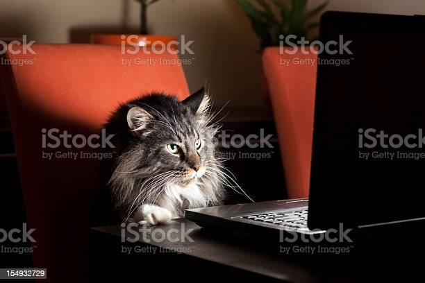 Cat with laptop picture id154932729?b=1&k=6&m=154932729&s=612x612&h=es7otiezy3szexgwxwzjjo8p0qlygfmzpysu2zknvms=