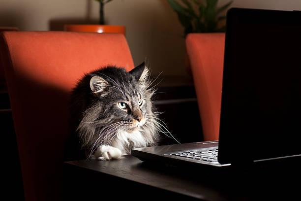 Cat with laptop picture id154932729?b=1&k=6&m=154932729&s=612x612&w=0&h=1eqxuf9ita 62xydm065fskp8tsmv7zwmqpagyn wuw=