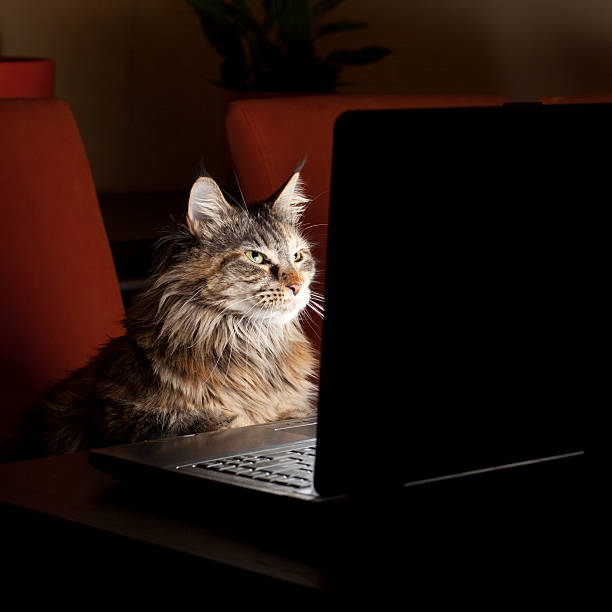 Katze mit Laptop – Foto