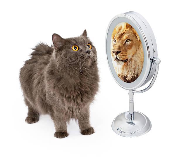 Chat Lion Banque d'images et photos libres de droit - iStock