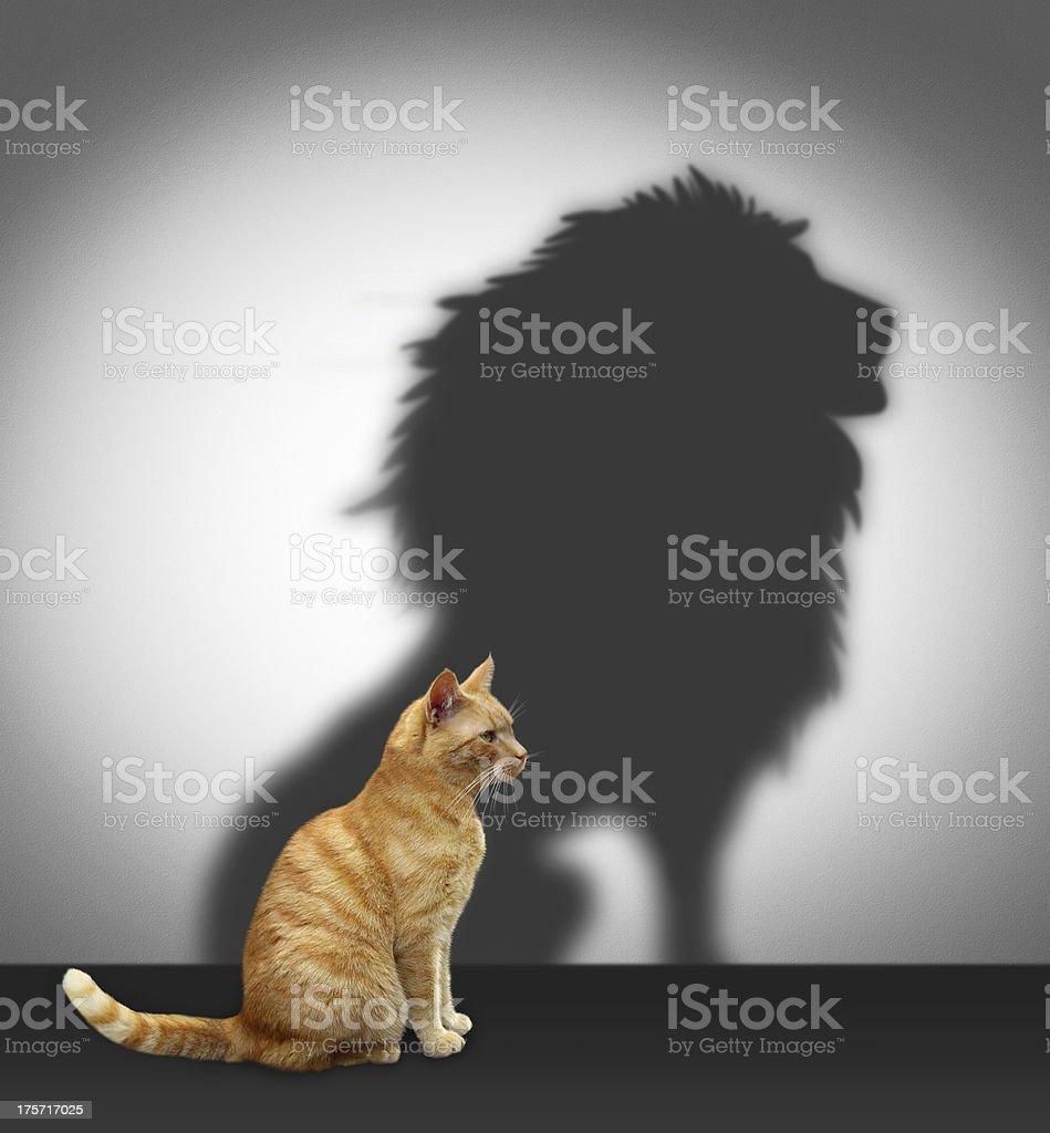 Gatto con l'ombra del leone foto stock royalty-free