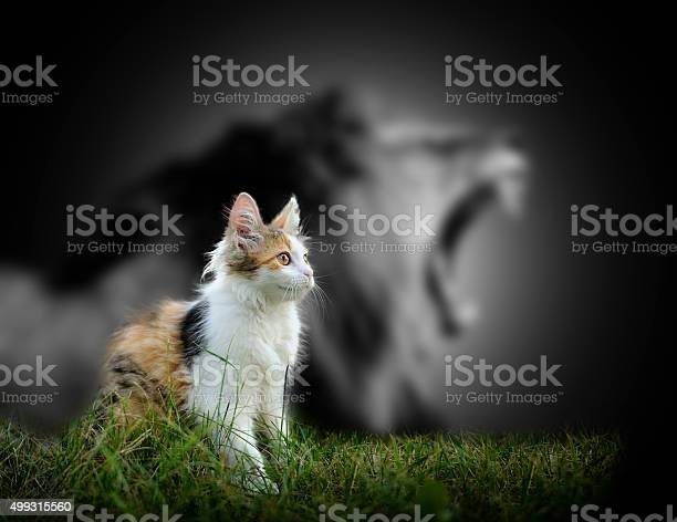 Cat with lion shadow picture id499315560?b=1&k=6&m=499315560&s=612x612&h=2uytscj5v9sfsduvgajcnbf0dhjggsae bkiygqv9oa=