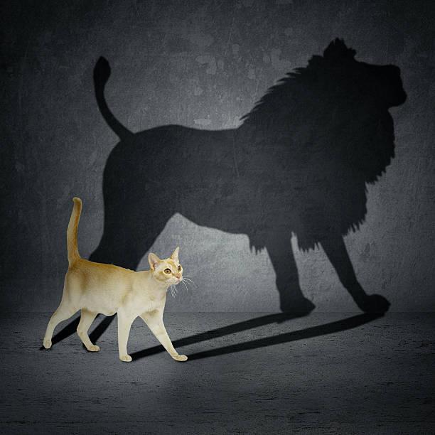 katze mit löwe shadow - dynamische posen stock-fotos und bilder
