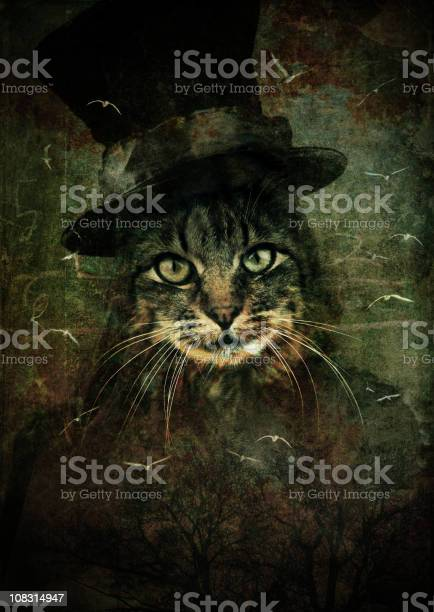 Cat with magician hat picture id108314947?b=1&k=6&m=108314947&s=612x612&h=uecncqcegmq5ppoatwu9tvmkdvss2l5obha4rx3t35s=