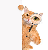 istock Cat with magnifying glass and searching 477694224