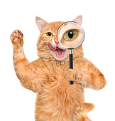 istock Cat with magnifying glass and searching 477773580