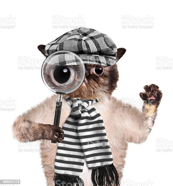 Cat with magnifying glass and searching picture id489591279?b=1&k=6&m=489591279&s=612x612&h=fkjulkbwg1p3c0nlxw0ug4qttboxegdzibazivfryk4=