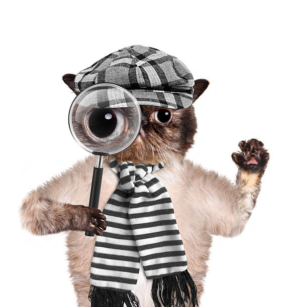 Cat with magnifying glass and searching picture id489591279?b=1&k=6&m=489591279&s=612x612&w=0&h=lsy p7wzsmlaxrrkzjwhxn3lhqguix9dvi7nhtuwk6e=