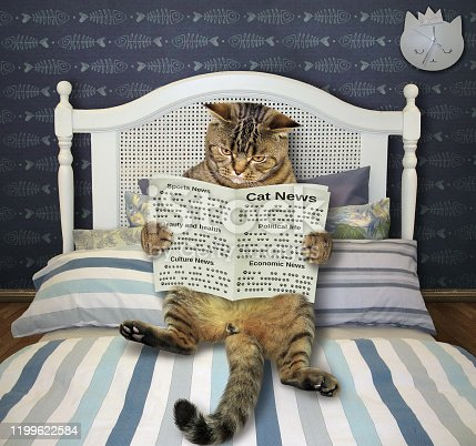 The beige cat with a newspaper is lying on the bed in his bedroom.