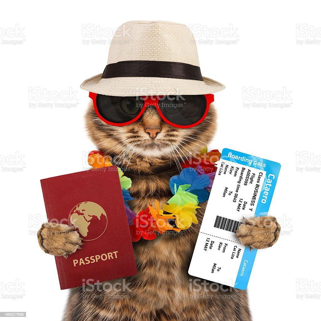 Cat with passport and airline ticket stock photo