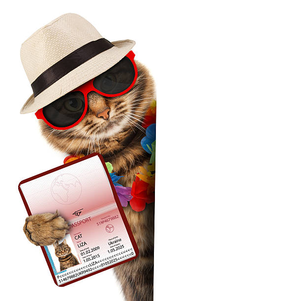 Cat with passport and airline ticket picture id485512474?b=1&k=6&m=485512474&s=612x612&w=0&h= 04xqro4ll 0y0wrahy2c jbplwcl evnr9ykno8e e=