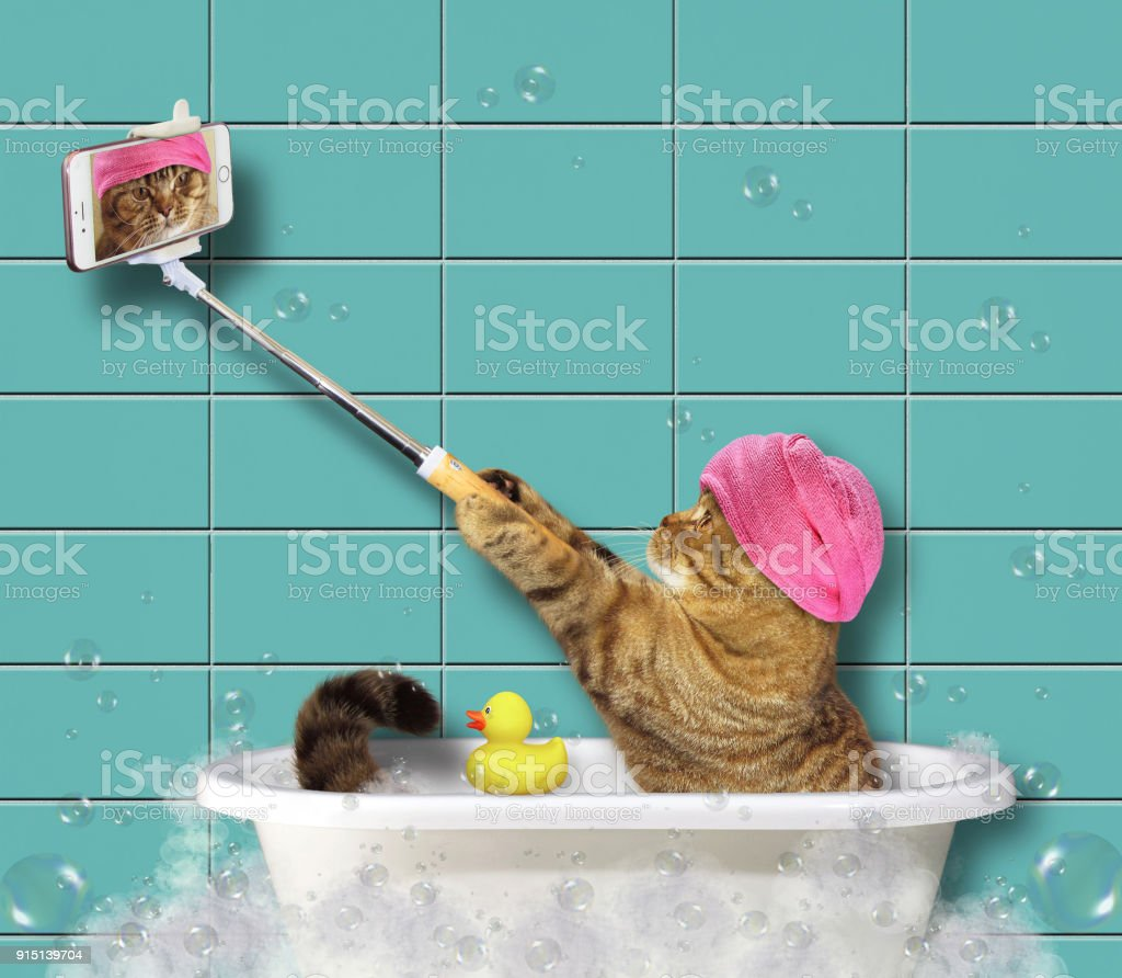Cat with phone in the bathroom 2 stock photo