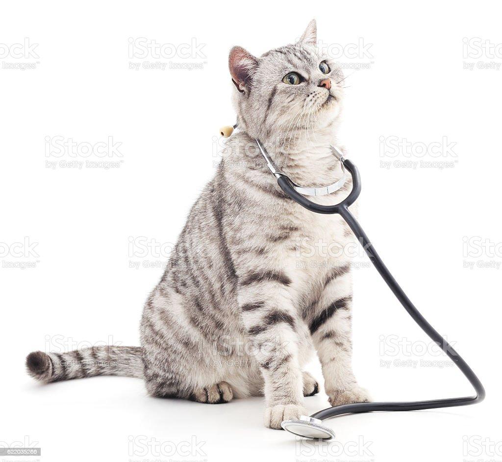 Cat with phonendoscope. stock photo