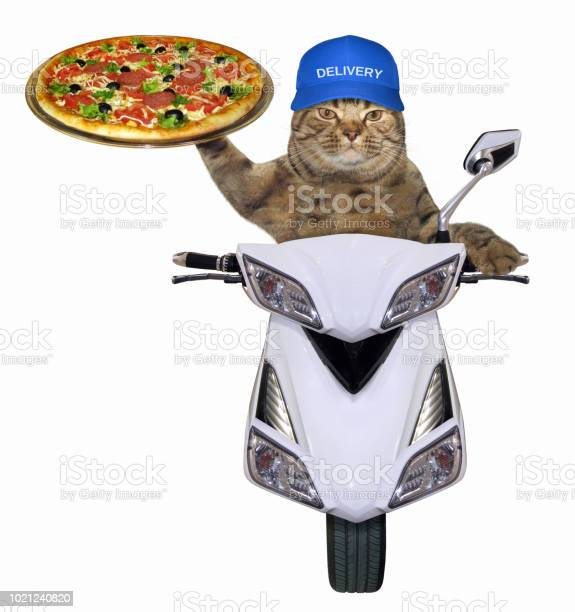 Cat with pizza on the scooter picture id1021240820?b=1&k=6&m=1021240820&s=612x612&h=k13fikofdt0zwd br3ckgac t51nqt42h9kzwalje0o=