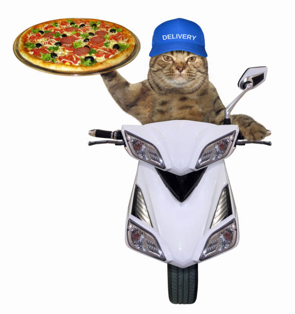 Cat with pizza on the scooter stock photo