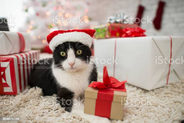 Cat with presents picture id859874156?b=1&k=6&m=859874156&s=612x612&h=nmt b8dbctw3wzyhuguym02ycigzinpftgfcwdg02ua=