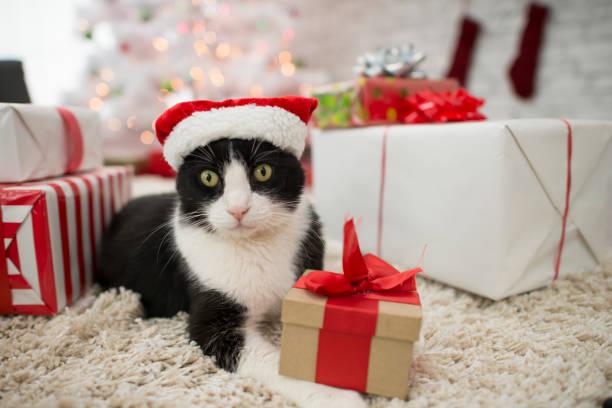 katze mit geschenken - katze weihnachten stock-fotos und bilder