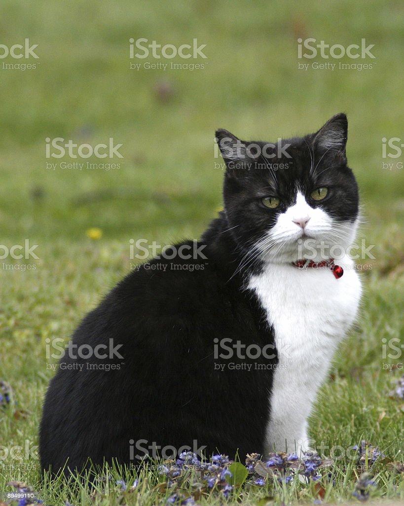 Kot z Czerwona Bell zbiór zdjęć royalty-free