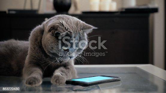 istock Cat with smart phone 853220430