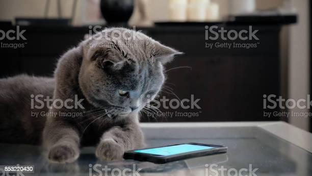 Cat with smart phone picture id853220430?b=1&k=6&m=853220430&s=612x612&h=icpanvn01caz5ncg sn9ixzgg7klpzflcifr9br2zn0=