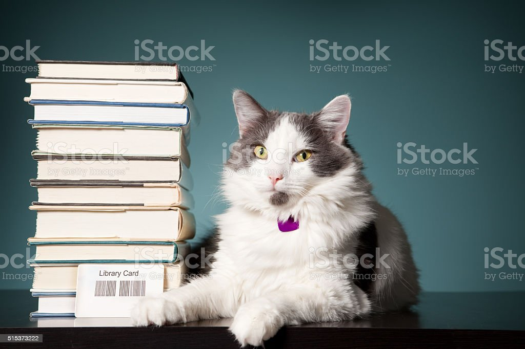 A beautiful white and gray cat sitting next to a stack of books and a...