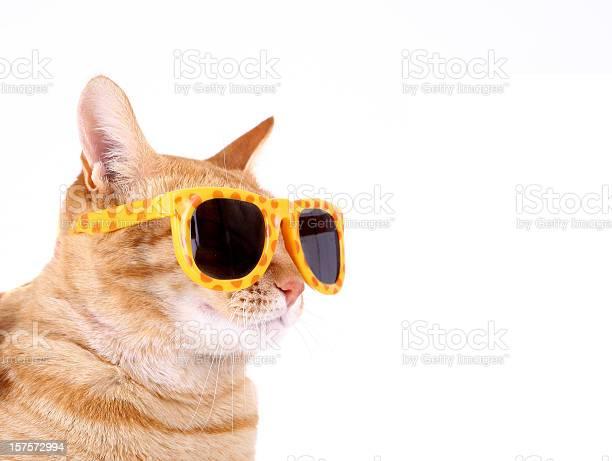 Cat with sunglasses picture id157572994?b=1&k=6&m=157572994&s=612x612&h=emsrutjr4e9wpeceldaap2t ao0ne61zqxas44vddkm=