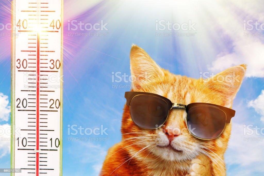 Cat with sunglasses stock photo