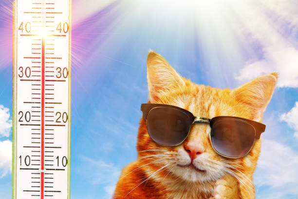 Katze mit Sonnenbrille – Foto