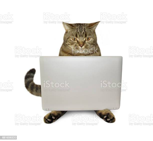 Cat with tablet 2 picture id681656320?b=1&k=6&m=681656320&s=612x612&h=gtvkpy18 sfmhgwwydhlefaj6idxad 4lkjvxkew xu=