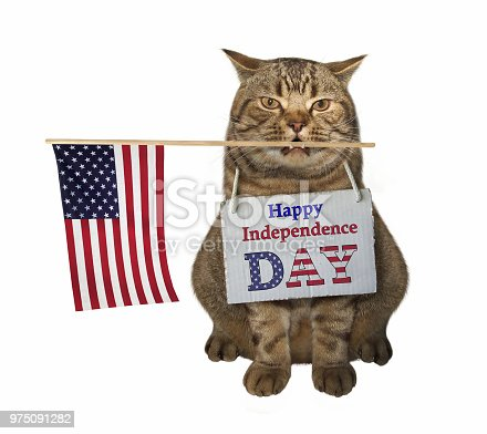 490776989 istock photo Cat with the American flag 975091282