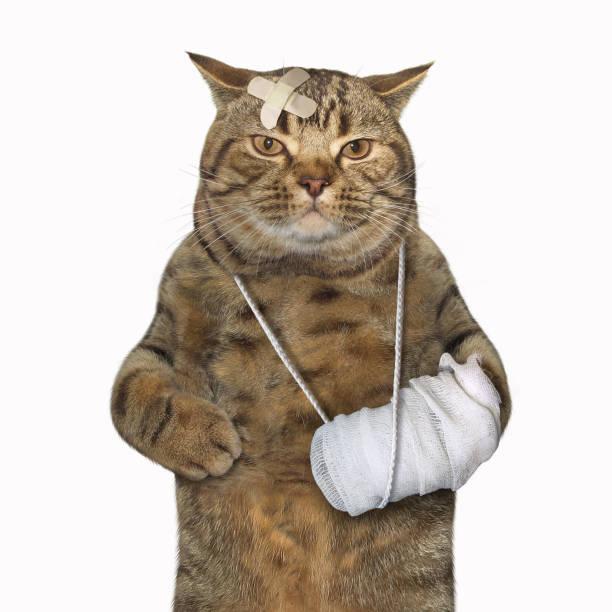 Cat with the broken leg stock photo