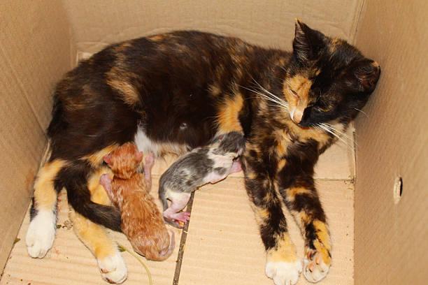 Cat with tiny kittens in box picture id587522992?b=1&k=6&m=587522992&s=612x612&w=0&h=9laby7zcnhxrdocg9jj 17u btqnkvmb1d378bywsxc=