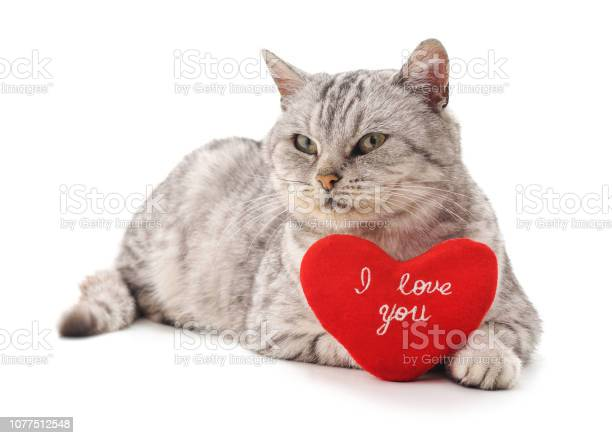 Cat with toy heart picture id1077512548?b=1&k=6&m=1077512548&s=612x612&h=h 7lovm  mz9upznineykaqukeqyqfu8ooqy7yycf24=