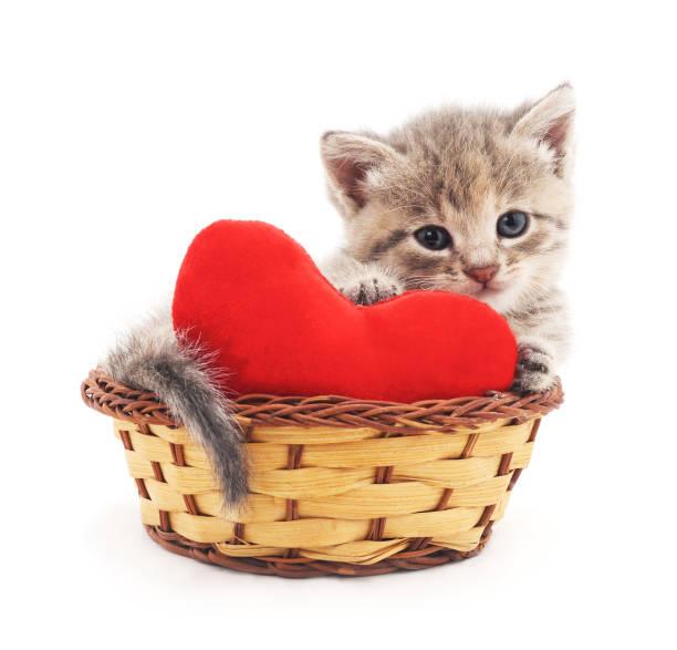 Cat with toy heart picture id675641848?b=1&k=6&m=675641848&s=612x612&w=0&h=rzfgmrnpovhg8z3g2ajftdgj7lvkdtz8jfwu6xmlzxo=