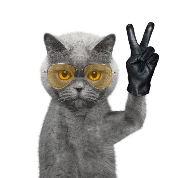 Cat with victory fingers isolated on white picture id948647726?b=1&k=6&m=948647726&s=612x612&w=0&h=auwuy1mdmrkf0w42yanvefqvleyyppi3gmo sbmdft8=