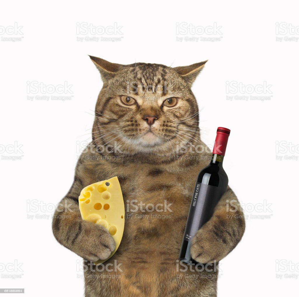 Cat with vine and cheese stock photo