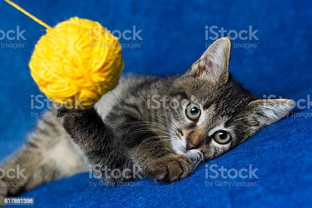 Cat with woolen ball picture id617881398?b=1&k=6&m=617881398&s=612x612&h=g snf0nymcj2 srgnxzk2vlcvk1on1rxfh25 hwnmfm=