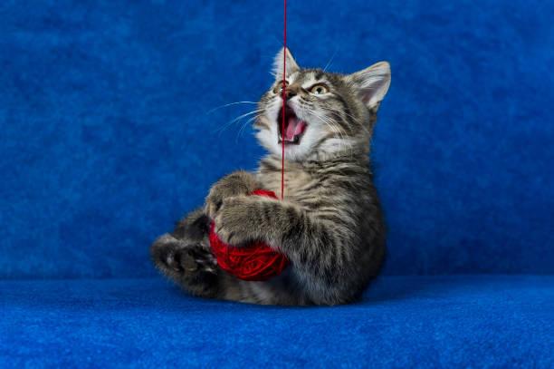 Cat with woolen ball picture id654790638?b=1&k=6&m=654790638&s=612x612&w=0&h=ovfbsneeffz1plju17apjbtsetiy  giq7h2hw6skbm=